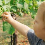 aziende tecnologiche e mercato del vino