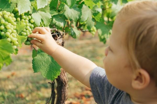 Come collaborano aziende tecnologiche e mercato del vino